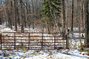 SUMMIT: NICE 5 ACRE LOT CLOSE TO SUMMIT LAKE, SWEET COUNTRY SETTING, ELECTRIC AT ROAD photo