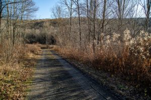 RICHMONDVILLE: NICE 5.24 ACRE PARCEL ON PRIVATE COUNTRY ROAD photo