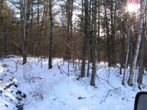 CHERRY VALLEY: MOSTLY WOODED ONE ACRE PARCEL ON TOWN MAINTAINED ROAD photo