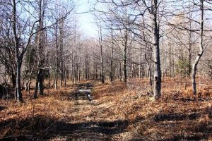 JEFFERSON: 64 MOSTLY WOODED ACRES, EXCELLENT RECREATION PROPERTY, LEVEL HIKING & ATV TRAILS photo