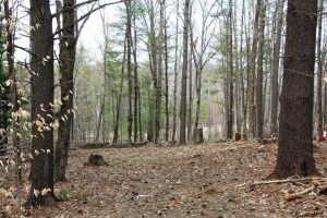 RICHMONDVILLE: 10 ACRES OF MATURE WOODS, DRIVEWAY INSTALLED, CLOSE TO MALLET POND STATE FOREST photo
