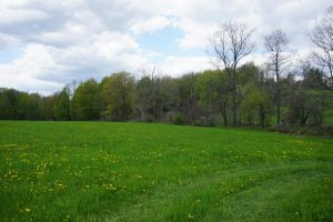 SHARON: 2 SEPARATE PARCELS, TOTAL OF 24 ACRES, ELECTRIC & CABLE AVAILABLE, SHORT DRIVE TO RT. 20 photo