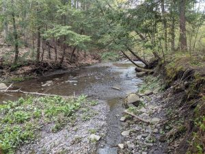 FT. PLAIN: 38.6 ACRES OF COMPLETE PRIVACY, IDEAL FOR HIKING, HUNTING, 4 WHEELING, PLENTY OF TIMBER photo