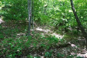 SUMMIT: 10.6 ACRES, WOODED RECREATIONAL PROPERTY COVERED WITH PINE TREES, LOTS OF WILDLIFE photo
