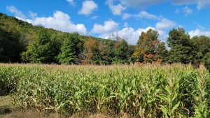 CHERRY VALLEY: A MUST SEE 154 ACRES OF MIX USE LAND, BREATHTAKING VIEWS, TILLABLE SOIL, TIMBER photo