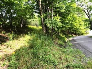 SUMMIT: 15.63 ACRES, POSSIBLE BUILDING SITE BY THE POND, BEAUTIFUL NATURE & WILDLIFE ALL AROUND photo