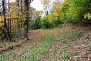 SUMMIT: NICE 5.59 ACRES PARCEL ON QUIET COUNTRY ROAD, EXCELLENT FOR RECREATION OR HOME SITE photo