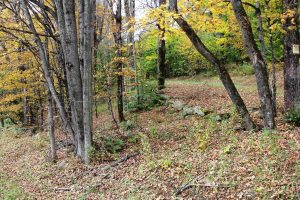 SUMMIT: END OF ROAD SETTING, 7.23 ACRES WITH VIEWS OF CATSKILL MOUNTAINS, TRAILS THROUGHOUT photo